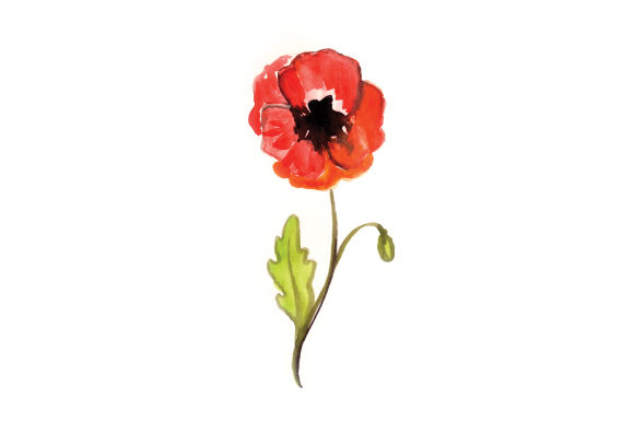 Watercolor Poppy Australia Craft Cut File By Creative Fabrica Crafts - Image 1