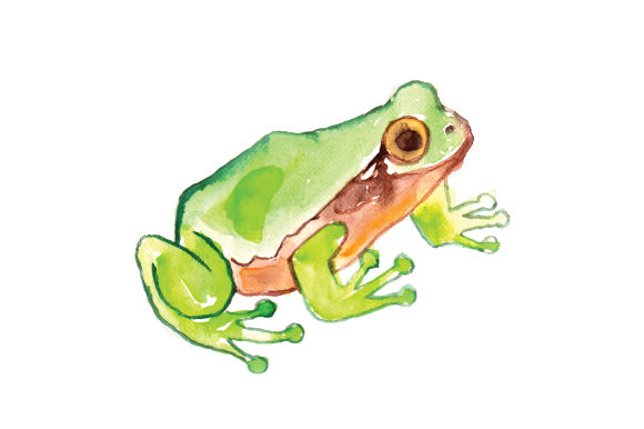 Watercolor Frog Animals Craft Cut File By Creative Fabrica Crafts