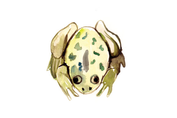 Download Free Watercolor Frog Svg Cut File By Creative Fabrica Crafts for Cricut Explore, Silhouette and other cutting machines.