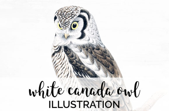 White Canada Owl Graphic Illustrations By Enliven Designs