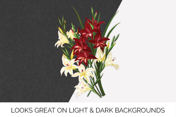 White and Scarlet Gladiolus Graphic Illustrations By Enliven Designs - Image 5