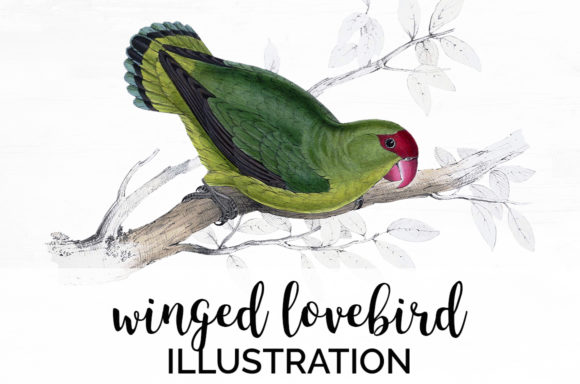 Winged Lovebird Graphic Illustrations By Enliven Designs