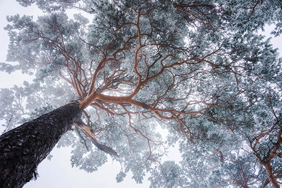 Winter in the Foggy Forest Graphic Photos By Aleš Krivec