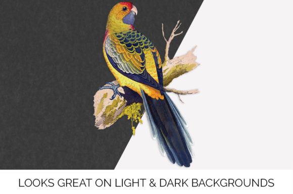 Yellow Rumped Parakeet Graphic Preview