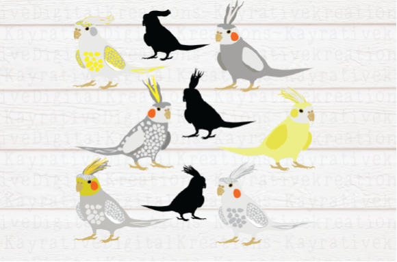 Cockatiel Graphic Crafts By Kayla Griffin