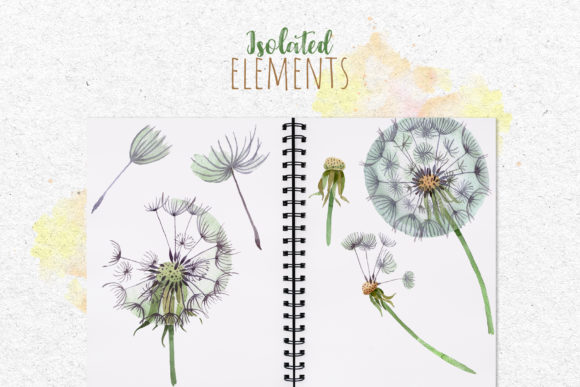 Dandelion Watercolor Png Graphic By MyStocks Image 6