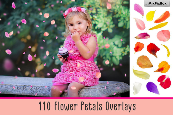 Download Free Flower Petals Photo Overlays Graphic By Mixpixbox Creative Fabrica for Cricut Explore, Silhouette and other cutting machines.