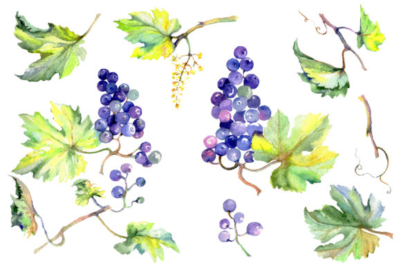 Print on Demand: Grapes Watercolor Graphic Illustrations By MyStocks