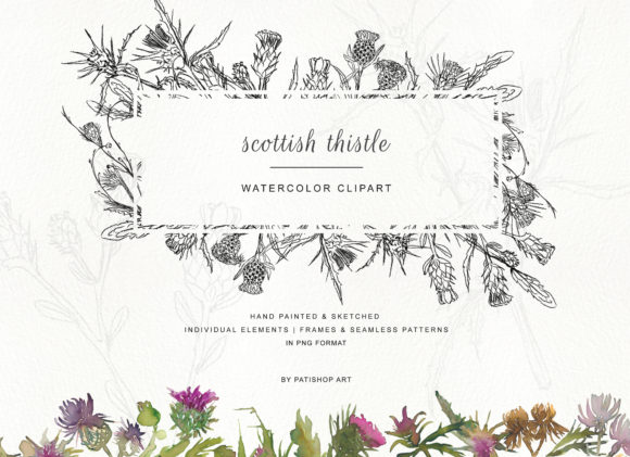 Hand Painted & Sketched Thistle Clip Art Graphic Illustrations By Patishop Art