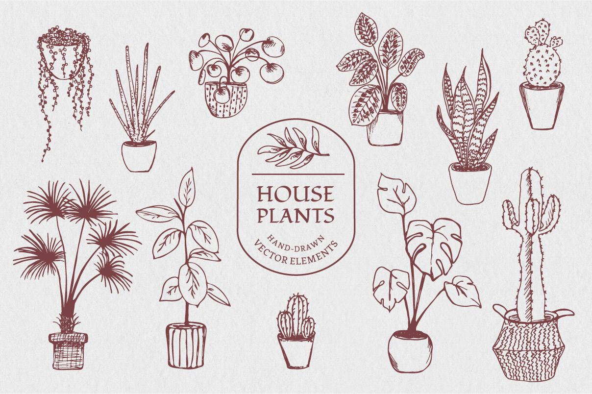 Download Free Illustrations Of Various House Plants Graphic By Anna Karoline for Cricut Explore, Silhouette and other cutting machines.
