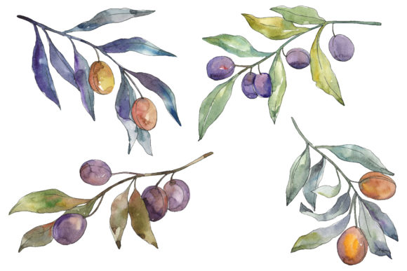 Download Free Olives 3 Watercolor Graphic By Mystocks Creative Fabrica for Cricut Explore, Silhouette and other cutting machines.