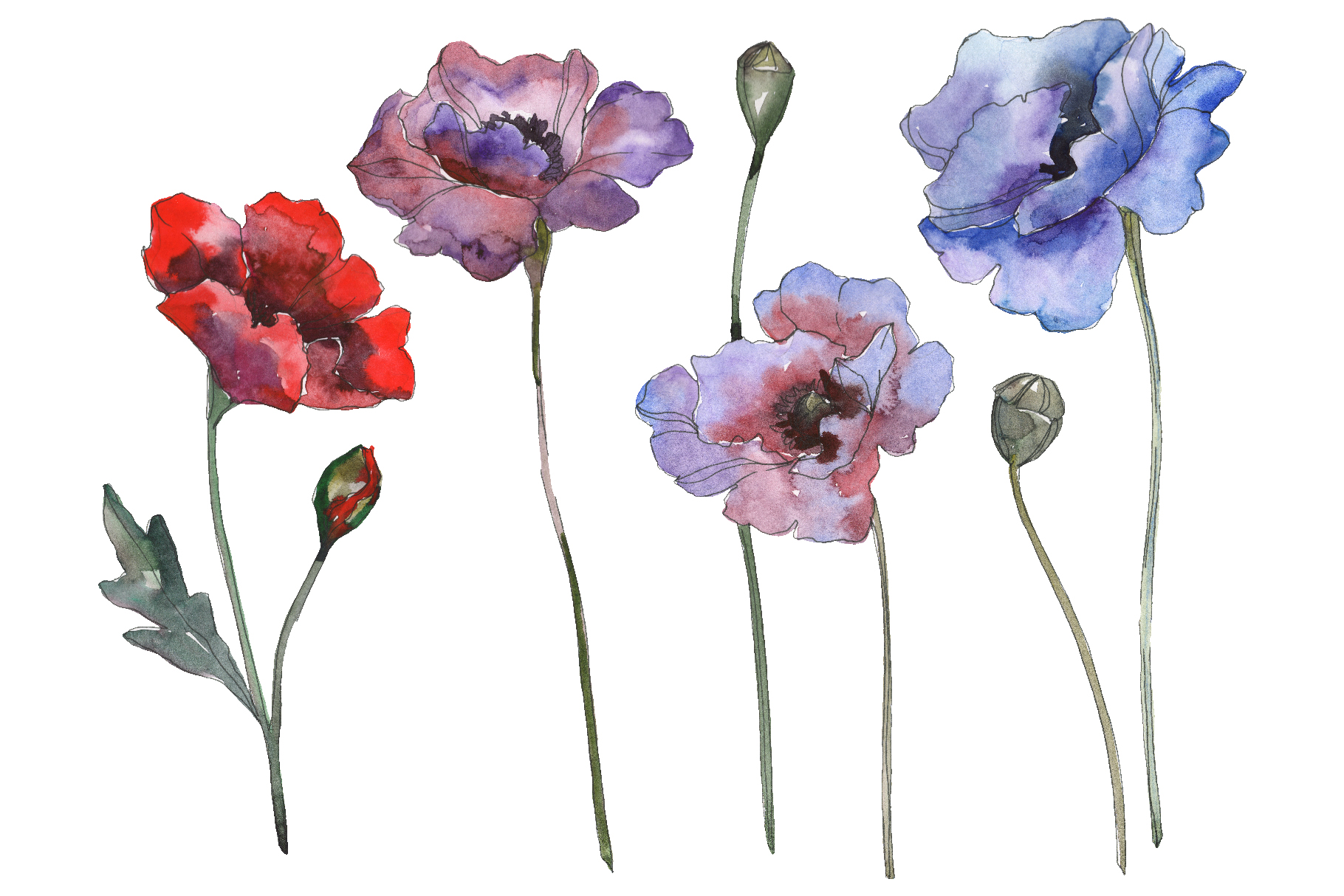 Download Free Poppy 1 Watercolor Graphic By Mystocks Creative Fabrica for Cricut Explore, Silhouette and other cutting machines.