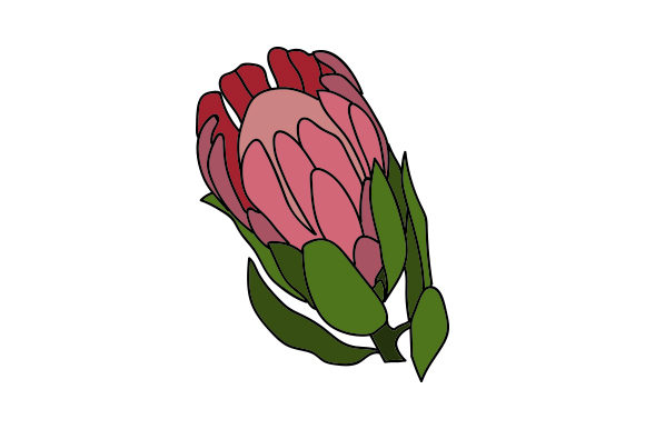 Download Free Protea Flower Svg Cut File By Creative Fabrica Crafts Creative for Cricut Explore, Silhouette and other cutting machines.