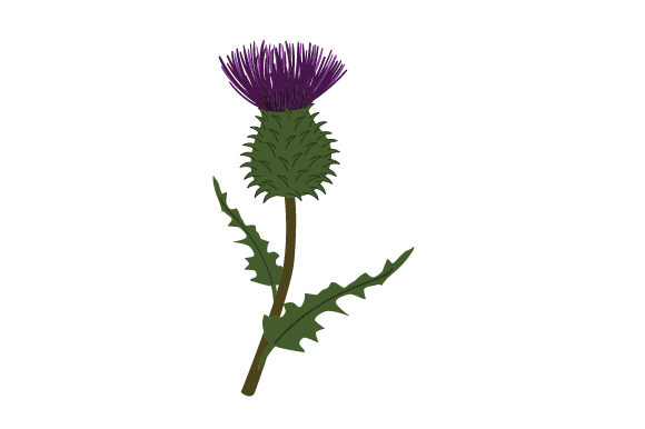 Realistic Thistle Scotland Craft Cut File By Creative Fabrica Crafts