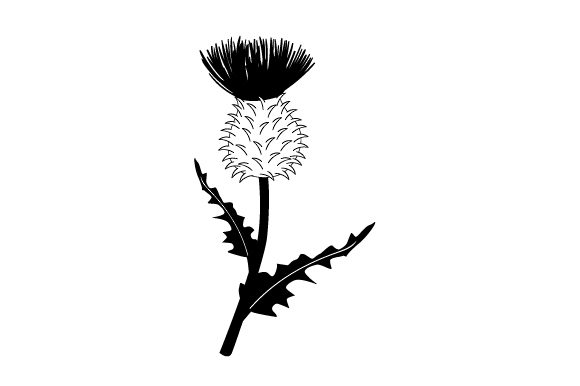 Download Free Realistic Thistle Svg Cut File By Creative Fabrica Crafts for Cricut Explore, Silhouette and other cutting machines.