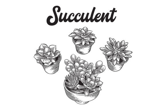 Succulent Graphic Illustrations By Nyctophil