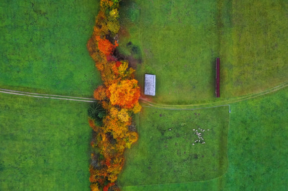 Trees, Grass and Animals from Above Graphic Photos By Aleš Krivec