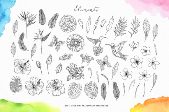 Tropical Blossom Graphic Collection Graphic By Nata Art Graphic Image 13