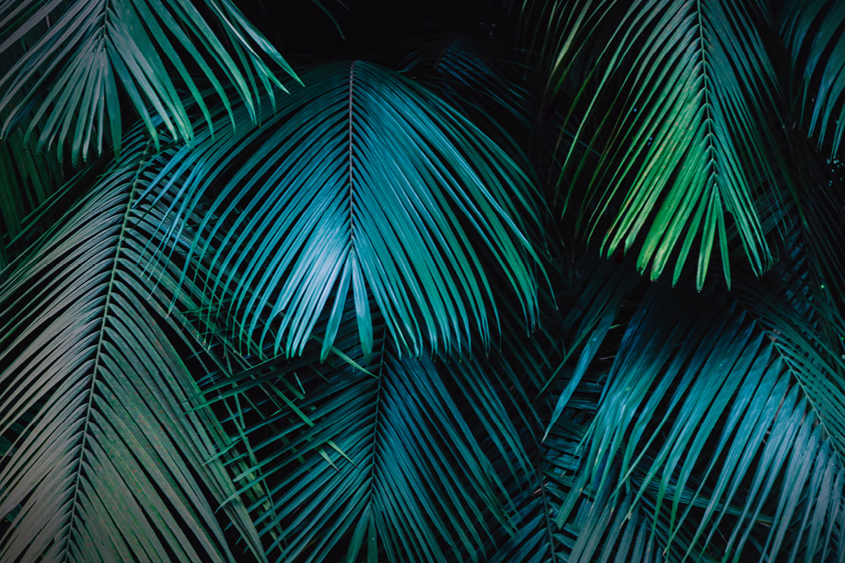 Download Free Tropical Jungle Themed Background Texture Of Palm Leaves Graphic for Cricut Explore, Silhouette and other cutting machines.