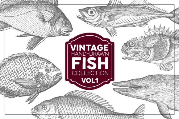 Vintage Fish Collection Grafik Illustrationen von grin3
