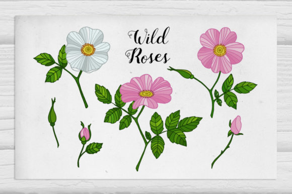 Wild Roses Illustrations Graphic Illustrations By Tabita's shop