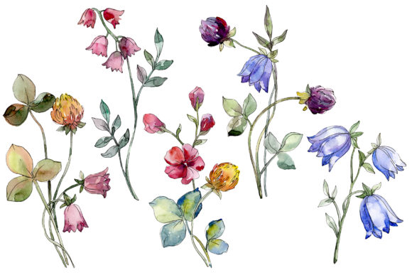 Print on Demand: Wildflowers Watercolor Graphic Illustrations By MyStocks