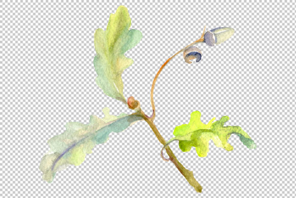 Print on Demand: Acorn Watercolor Png Graphic Illustrations By MyStocks - Image 5