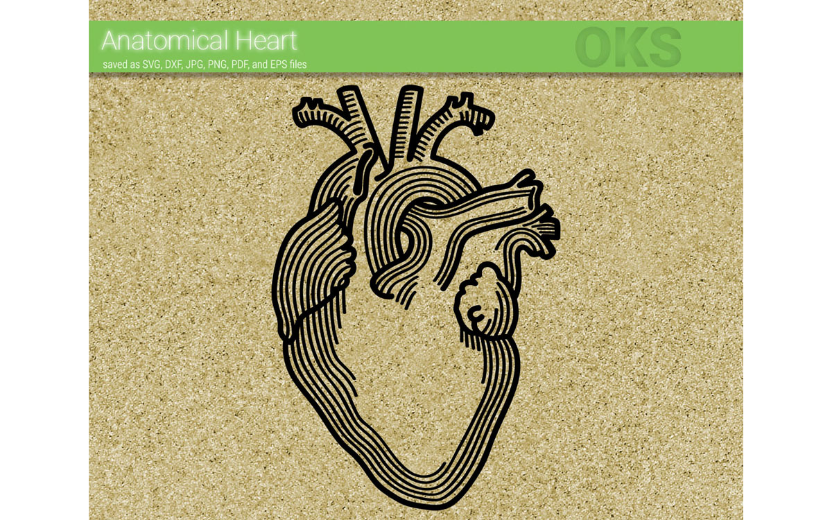 Download Free Anatomical Heart Vector Graphic By Crafteroks Creative Fabrica for Cricut Explore, Silhouette and other cutting machines.