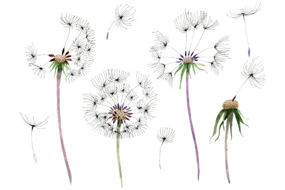 Print on Demand: Bouquet Rainbow Dandelion Watercolor Graphic Illustrations By MyStocks