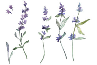 Download Free Bouquet Summer Breeze Lavender Graphic By Mystocks Creative SVG Cut Files