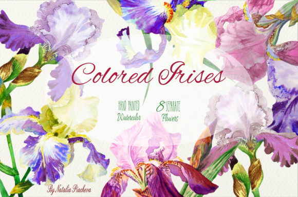 Print on Demand: Colored Irises Watercolor Clipart Graphic Illustrations By natalia.piacheva