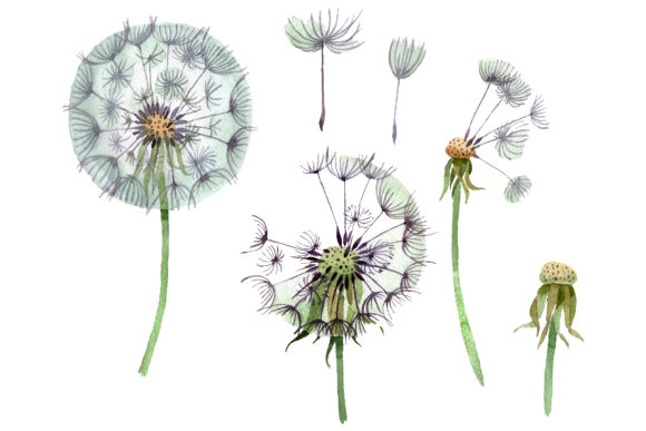 Print on Demand: Dandelion Summer Greeting Watercolor Png Graphic Illustrations By MyStocks - Image 1