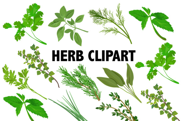 Herbs Clipart Graphic Illustrations By Mine Eyes Design