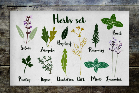 Herbs Set Graphic Illustrations By Tabita's shop