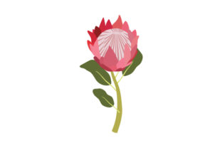 National Flower - Protea South Africa Craft Cut File By Creative Fabrica Crafts