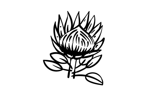 Download Free National Flower Protea Svg Cut File By Creative Fabrica Crafts for Cricut Explore, Silhouette and other cutting machines.