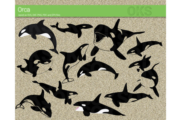 Download Free Orca Killer Whale Svg Vector Grafik Von Crafteroks Creative for Cricut Explore, Silhouette and other cutting machines.