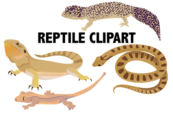 Reptile Clipart Graphic By Mine Eyes Design