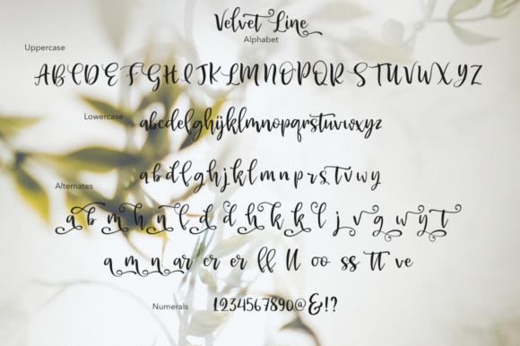 Print on Demand: Velvet Line Script & Handwritten Font By Pasha Larin - Image 7