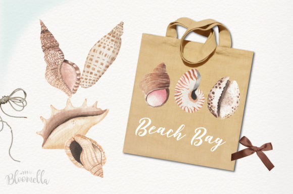 Watercolor Sea Shells Clipart Set Graphic Illustrations By Bloomella