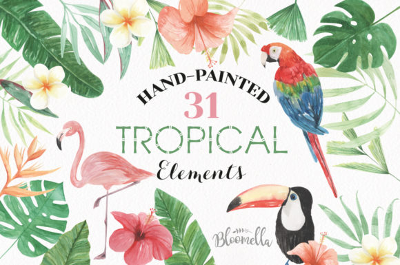 Elements Tropical Package Flamingo Tucan Graphic Illustrations By Bloomella