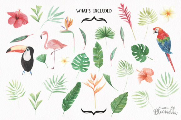 Elements Tropical Package Flamingo Tucan Graphic By Bloomella Image 7