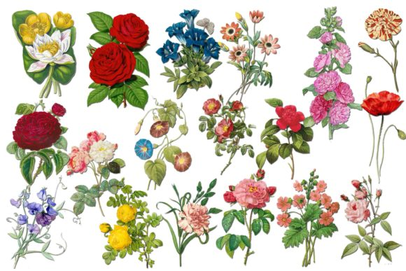 Flowers Clip Art Graphic Illustrations By twelvepapers