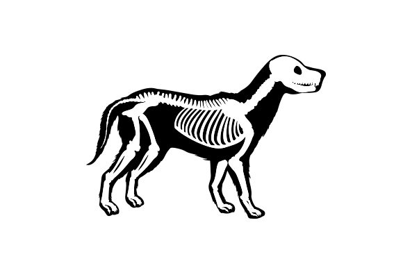 Download Free Skeleton Animal Svg Cut File By Creative Fabrica Crafts for Cricut Explore, Silhouette and other cutting machines.