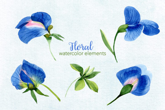 Print on Demand: Sweet Pea Flowers Watercolor Png Graphic Illustrations By MyStocks - Image 9