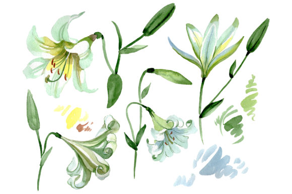 Print on Demand: White Lilies Watercolor Graphic Illustrations By MyStocks