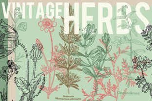 Download Free Vintage Herbs Set Of 30 Graphic By Lunarctic Creative Fabrica for Cricut Explore, Silhouette and other cutting machines.