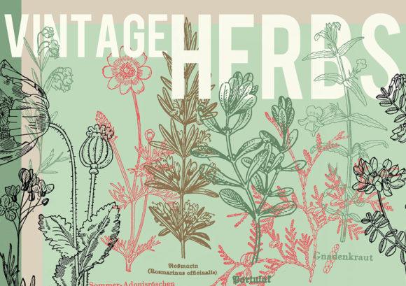 Print on Demand: Vintage Herbs Set of 30 Graphic Illustrations By lunarctic