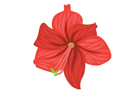 Amaryllis Svg Cut File By Creative Fabrica Crafts Creative Fabrica