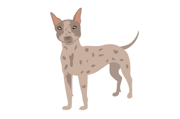 American Hairless Terrier Dog Breed Dogs Craft Cut File By Creative Fabrica Crafts